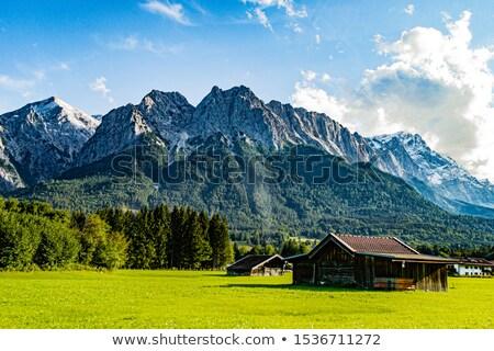Германия · дерево · трава · лес · пейзаж · снега - Сток-фото © val_th