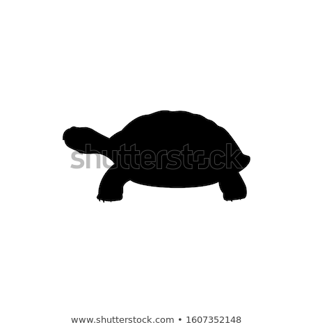 Turtles Tortoise Stock photo © smuki