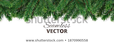 Evergreen confine albero verde foglie fogliame Foto d'archivio © reicaden