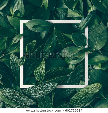 green leaf abstract frame stock photo © nejron