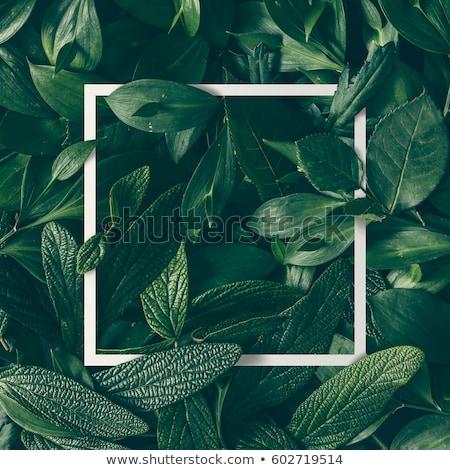 Foto stock: Hoja · verde · resumen · marco · textura · primavera · naturaleza