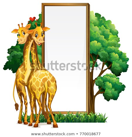 Iki zürafalar örnek arka plan park Stok fotoğraf © colematt