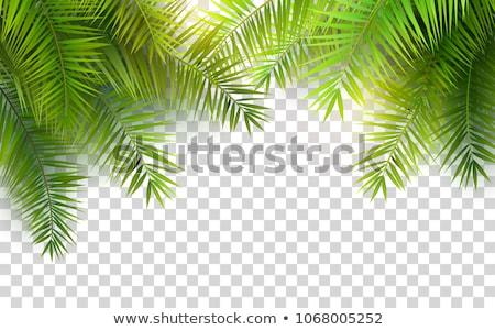 кадр зеленый пальмовых листьев изолированный прозрачный градиент Сток-фото © barbaliss