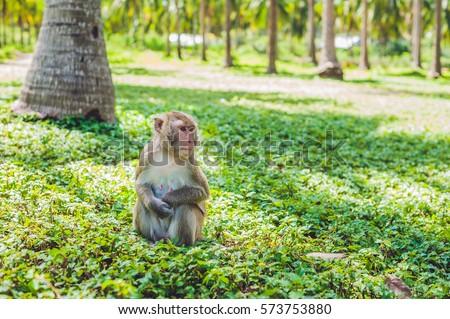 Macaque monkey sitting on the ground. Monkey Island, Vietnam Stock photo © galitskaya