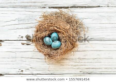 European Robin Eggs in a Real Nest  Stock photo © StephanieFrey