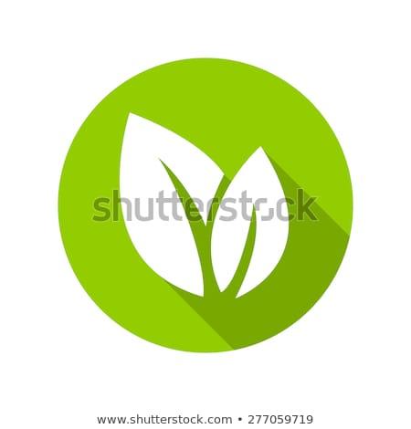 Környezetbarát levél felirat zöld gomb 3D Stock fotó © marinini