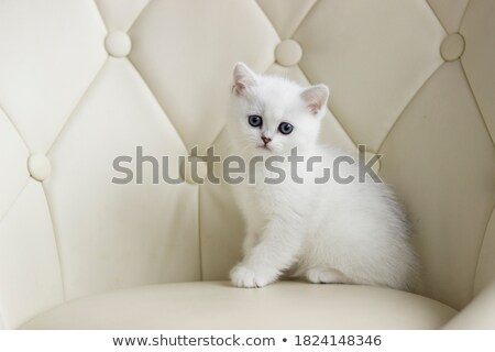cute blue eyed tabby kitten stock photo © dnsphotography