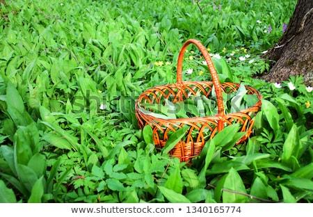 bear holding basket of vegetable Stock photo © colematt