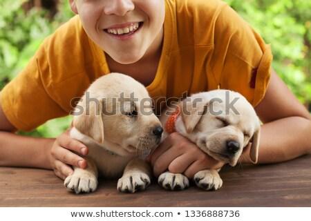 happy teenager boy posing with his cute labrador puppies stock photo © ilona75