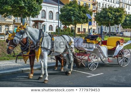 República Checa cidade vintage animal Foto stock © borisb17