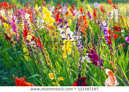 fleur · parc · macro · peu · profond · profonde · domaine - photo stock © frankljr
