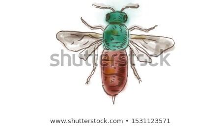 Ruby guêpe dessin couleur pour aquarelle blanche couleur Photo stock © patrimonio