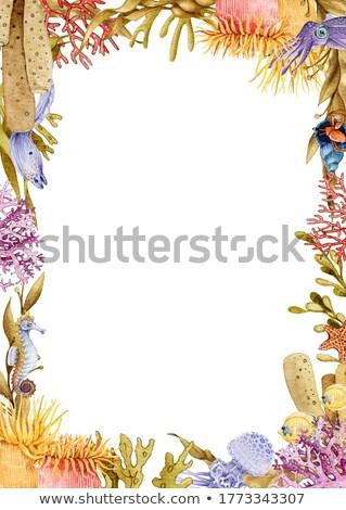 sea life arrangement stock photo © prill