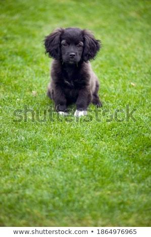 щенков · собака · полу · глядя · печально · изолированный - Сток-фото © eriklam