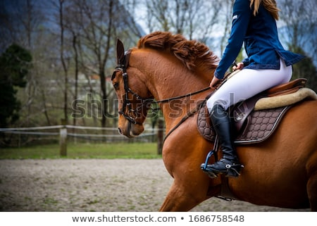 lovas · lóháton · nő · ló · bikini · pihen - stock fotó © phbcz