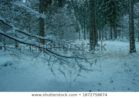 landscape covered with snow and pale sky Stock photo © kaycee