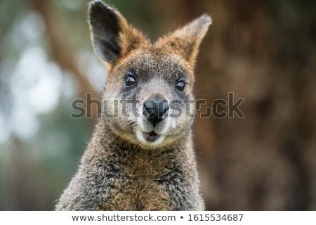 ショット 自然 動物 屋外 日 ストックフォト © macropixel