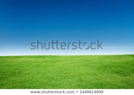 çim alanı ufuk mavi gökyüzü alan çim yaz Stok fotoğraf © byjenjen