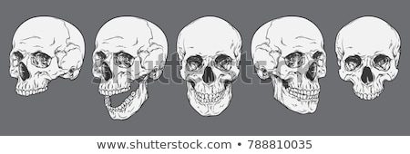 Human skull - bone head dead teeth spooky scary pirate isolated  Stock photo © jeremywhat