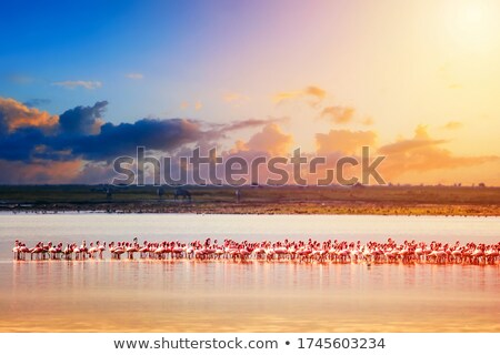flamingo and sea Stock photo © mariephoto
