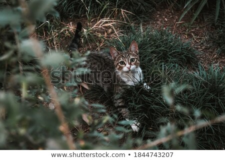 Kitty in the Wilderness Stock photo © tepic