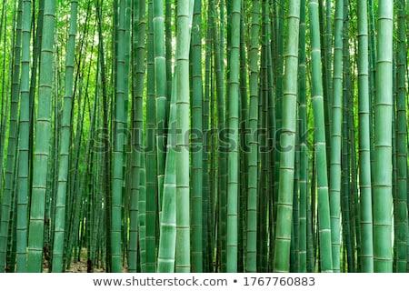 Bambu kyoto ağaç orman Stok fotoğraf © julian_fletcher