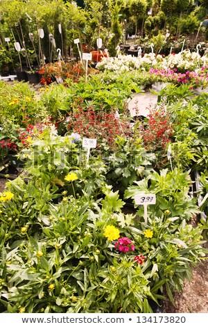 завода питомник блошиный рынок Берлин Германия цветок Сток-фото © eldadcarin