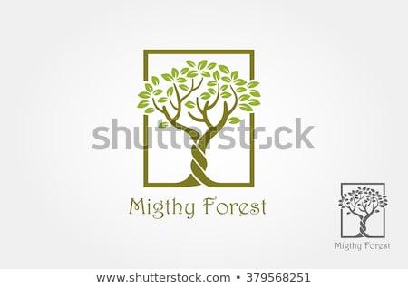 two trees stock photo © cteconsulting