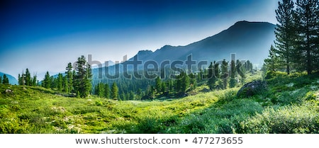 Herbe montagne gamme ciel nuages nature Photo stock © zzve