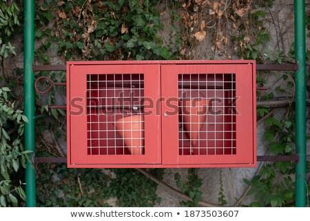 два зеленый стен огня слабый отражение Сток-фото © dvarg