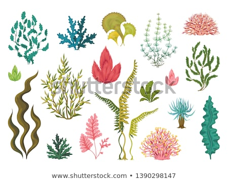 tengeri · élet · szett · egyszerű · tenger · illusztrációk - stock fotó © MKucova