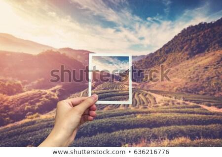 cuadrados · Polaroid · transferir · blanco · textura · espacio - foto stock © redpixel