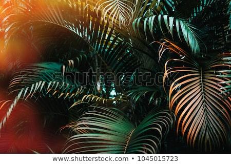тропические зеленый пальмами Бали Индонезия безмятежный Сток-фото © juniart
