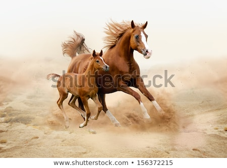 brown horse and foal looking stock photo © yongkiet