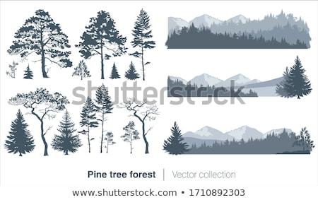 Groep pijnboom drie textuur bos natuur Stockfoto © olandsfokus