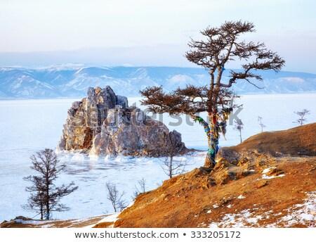 Egyedüli fa jeges sziklák mészkő part Stock fotó © olandsfokus