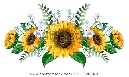 Gele bloem zonnebloem gebruikt zon natuur Stockfoto © LoopAll