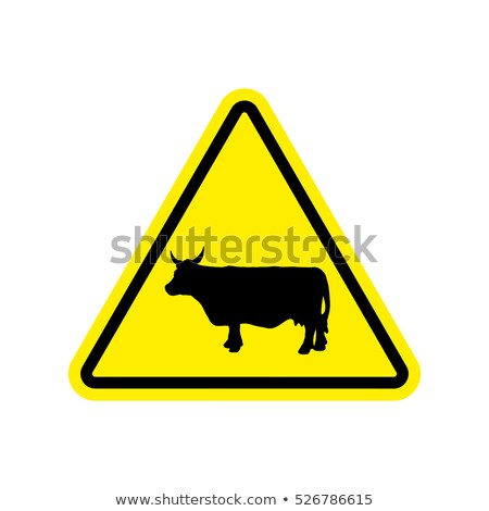 Attentive cow Stock photo © tilo