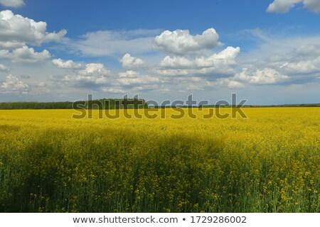 kék · ég · csend · égbolt · virág · tavasz · naplemente - stock fotó © lypnyk2