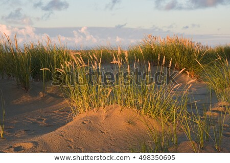 Foto stock: Nascer · do · sol · mar · báltico · cuspir · Lituânia · praia · céu