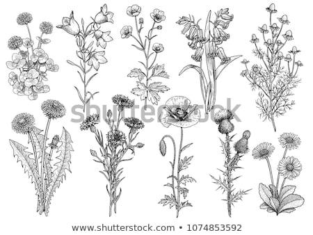 группа области зеленая трава цветок цветы красоту Сток-фото © olandsfokus