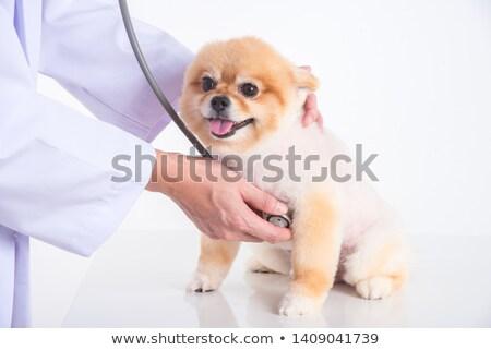 Dierenarts kantoor hond werken baan Stockfoto © wavebreak_media