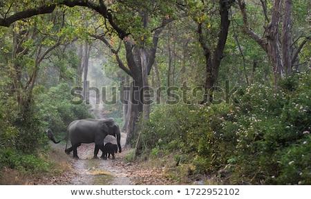 Silhouette · Elefanten · Stier · Insel · Fluss · Sonnenuntergang - stock foto © adrenalina