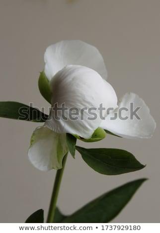 Képzőművészet fotó álomszerű fehér kép természet Stock fotó © konradbak