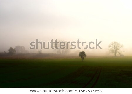 rural Eifel landscape with road and green meadow Stock photo © meinzahn