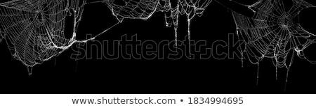 insetto · primo · piano · spider · seduta · ragnatela · natura - foto d'archivio © lightsource