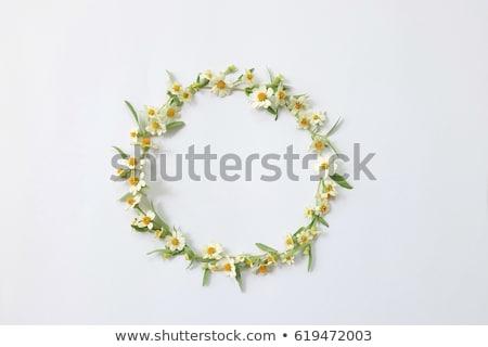 Daisy ringen bruid bruidegom holding handen kamille Stockfoto © O_Lypa