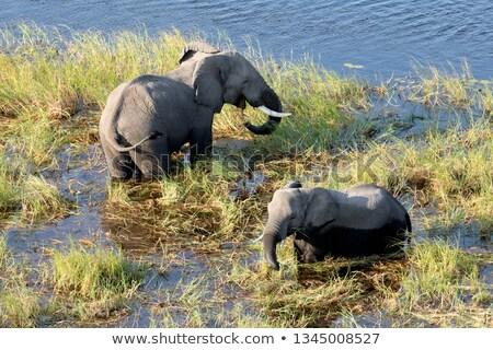 Stock fotó: Elefánt · fölött · kék · fa · baba · háttér