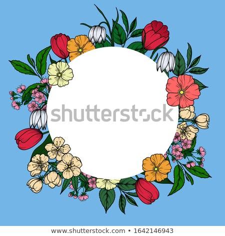 Tulpen · Design-Vorlage · eps · 10 · Vektor · Datei - stock foto © beholdereye