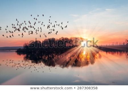 鳥 · 谷 · 幽霊 · 日の出 · ツリー · 太陽 - ストックフォト © oleksandro